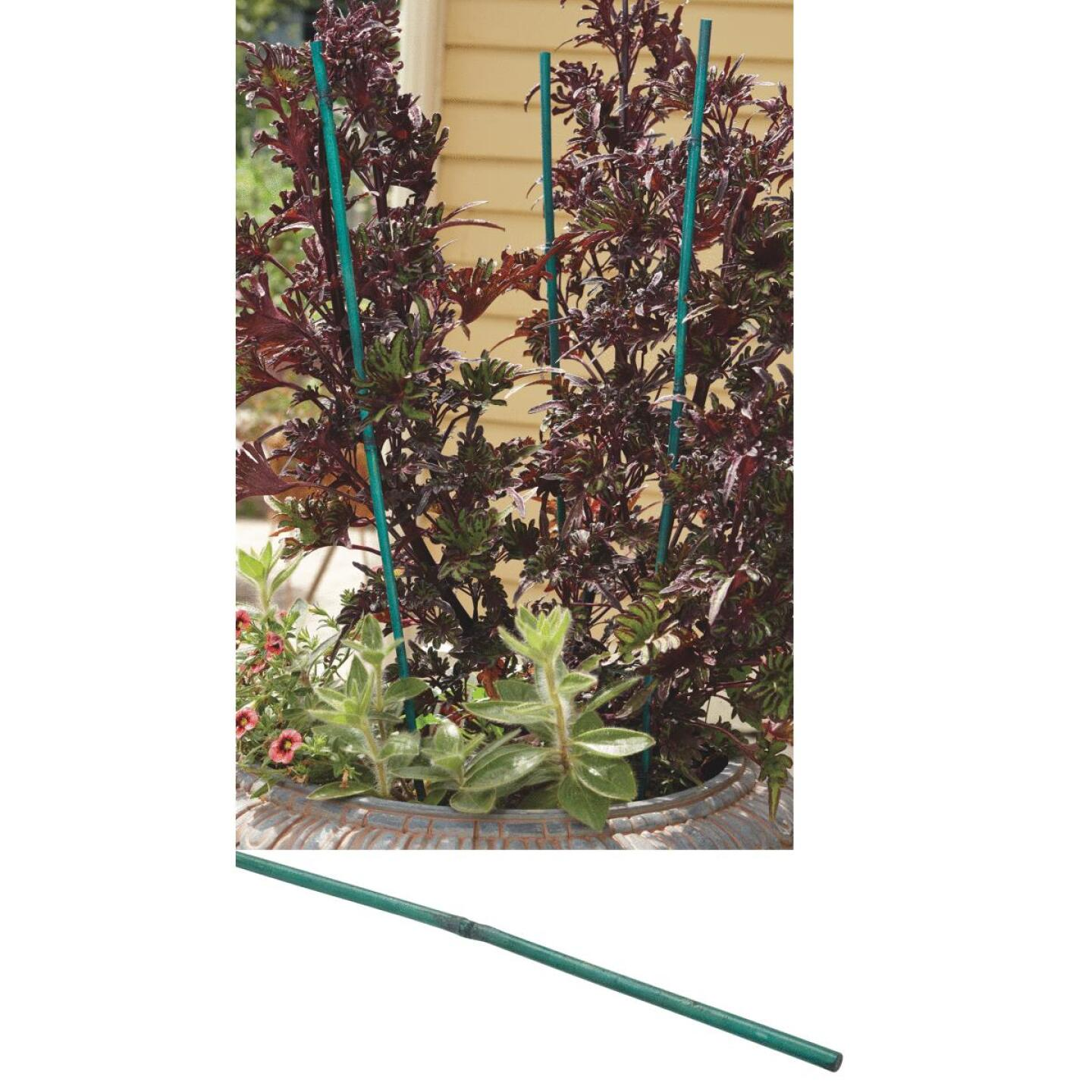 Bond 4 Ft. Green Bamboo Plant Stakes (25-Pack) Image 15